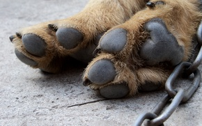 Picture dog, macro, pads, fatigue, legs, crack, wool, tenacious, dog paws, chain