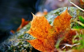 Picture grass, sheet, fallen, autumn