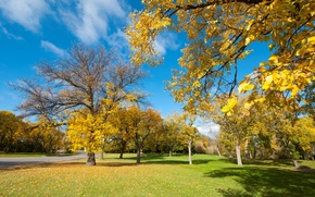 Wallpaper Park, road, bench, trees, leaves, the sky, grass, autumn