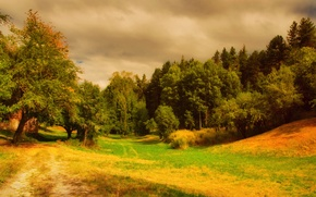 Picture nature, glade, Forest