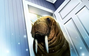 Picture room, the door, walrus