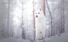 Wallpaper dog, look, winter, each
