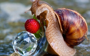 Picture macro, snail, berry