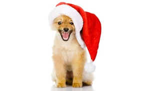 Picture animals, red, holiday, new year, dog, red, puppy, white background, Santa, cap, Wallpaper from lolita777