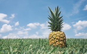 Picture the sky, grass, pineapple