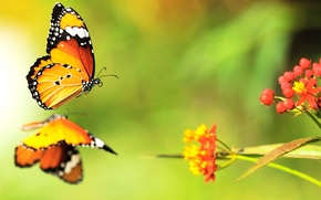 Picture color, butterfly, flowers, bright