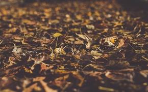 Picture autumn, macro, foliage, bokeh