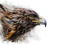 Picture background, bird, eagle, beak, art, profile