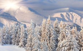 Picture winter, snow, trees, landscape, nature, tree
