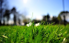 Picture greens, summer, grass, macro, lights, lawn, lawn