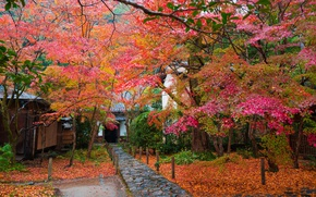 Wallpaper leaves, Japan, track, trees, garden, house, autumn