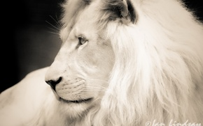 Picture white, face, photoshop, Leo, b/W, profile, black and white photo