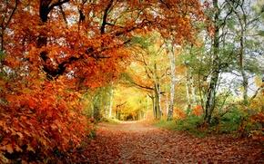 Picture autumn, leaves, Park, color