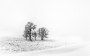Picture winter, field, snow
