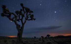 Picture Sand, Tree, Night, Desert, Mexico, CA, USA, Stars, Joshua Tree National Park