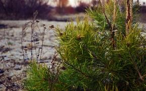 Picture #wood, #nature, #pine, #landscape
