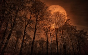 Picture forest, birds, nature, the moon, the evening