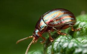 Picture greens, beetle, insect, bokeh