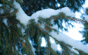 Picture snow, tree, new year, Winter, spruce
