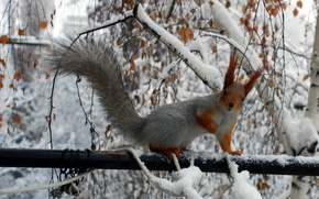 Picture winter, branches, protein