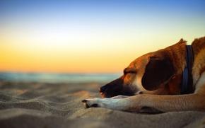 Picture beach, twilight, sea, sunset, dog, sand, dusk, seaside, dreams, sleepin