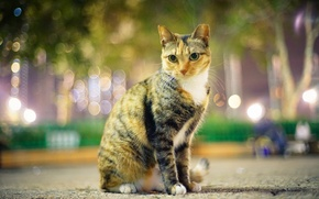 Picture cat, look, the city, lights, Park, the evening, costumes