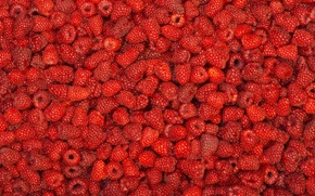 Picture raspberry, berry, a lot