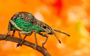 Picture background, legs, beetle, antennae, a blade of grass