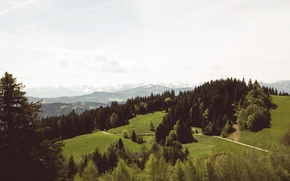 Picture road, greens, summer, grass, trees, mountains, slope, panorama, forest, meadows