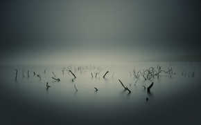 Picture branches, roots, fog, swamp