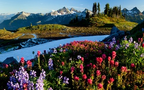 Picture Flowers, Mountains, Snow, Dawn