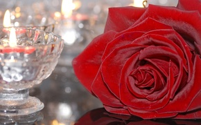 Wallpaper flower, glass, rose, candle, candle holder, Burgundy