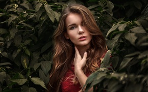 Picture look, girl, face, green, sweetheart, foliage, portrait, makeup, light, brown hair, beautiful, the beauty, art, …