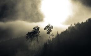 Wallpaper forest, trees, fog, hills, haze