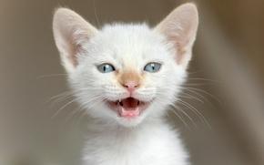 Wallpaper look, muzzle, eyes, kitty
