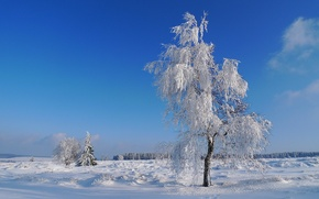 Picture winter, frost, field, the sky, snow, tree