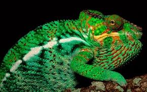 Wallpaper Tree, chameleon, green, look