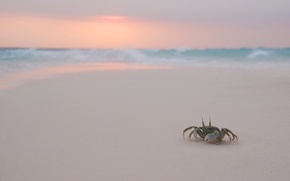 Picture Beach, The evening, Crab