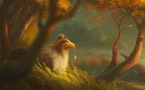 Picture autumn, forest, trees, the wind, dog, medallion, art, collie