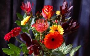 Picture leaves, bouquet, petals, stem, gerbera
