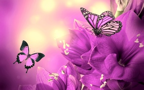 Picture flower, collage, butterfly, wings, petals