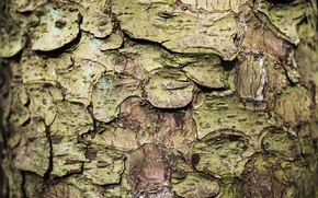 Picture nature, tree, bark