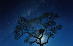 Picture space, stars, night, tree, bird, the milky way