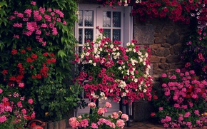 Picture greens, flowers, house, wall, the door