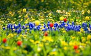 Picture flowers, nature, garden, field flowers