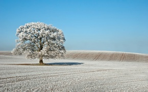 Picture frost, field, tree, The sky, winter.