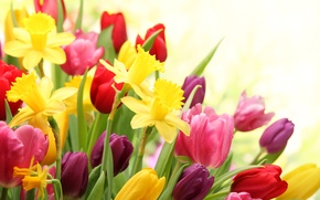 Picture flowers, spring, tulips, flowering, daffodils