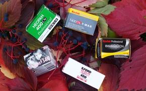 Picture leaves, berries, film