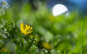 Picture flower, flowers, yellow, glare, spring, meadow
