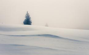 Picture snow, fog, tree